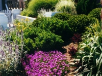 beach-landscape-design-virginia-beach-6
