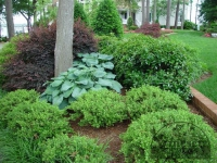 traditional-landscaping-virginia-beach-22