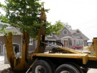 tree-installation-virginia-beach-1