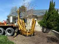 tree-installation-virginia-beach-3