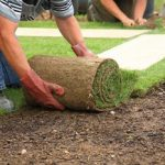 care tips new sod virginia beach