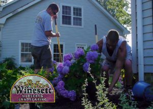Watering & Plant Care